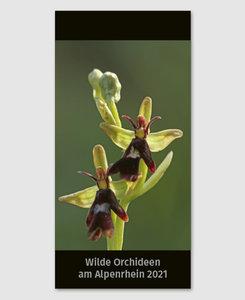Wilde Orchideen am Alpenrhein 2021